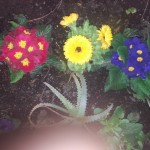Lindos colores 14 de abril.