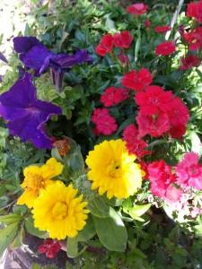 "Lindos colores ""14 de abril""."