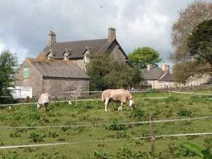 """Caballos con mantas frente a la """"Vieja Casa del Vicario"""" de Wetton"""