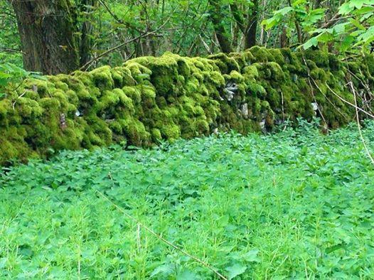 Verdes ingleses para todos los gustos. Musgo de siglos...